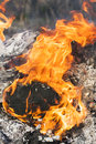 Fire flames around black tree log burning Stock Image