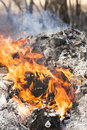 Fire flames around black tree log burning Royalty Free Stock Photos