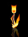 Fire flower on black Royalty Free Stock Photo