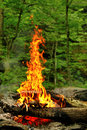 Fire in the forest fireplace stara planina mountain bulgaria Royalty Free Stock Photos