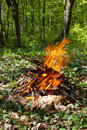 Fire in the forest a spring green leaves Royalty Free Stock Photos