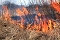 Fire in herb Stock Image