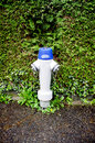 Fire hydrant in front of bush with blue head bushes Royalty Free Stock Photo