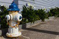 Fire hydrant manzanita blue and white in oregon Royalty Free Stock Photography