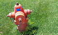 Fire hydrant red in green grass with some weeds at the base Stock Image