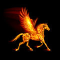 Fire pegasus in motion on black background Stock Photography