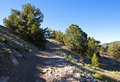 Fire Road in the Mountains near Salida, CO Stock Images