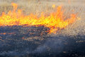 Fire in the steppe. Burning dry reeds Royalty Free Stock Photo