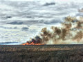 Fire in the steppe. Burnout dry last years grass Royalty Free Stock Photo