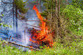 Fire in the summer forest. Royalty Free Stock Photo