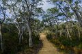 Fire trail in the Australian bush Royalty Free Stock Photo