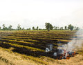 Fire was burning straw. Royalty Free Stock Photo