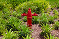 Fire water hydrant Stock Photos