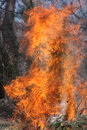 Fire wild brush burning out of control Royalty Free Stock Photo