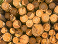Drevo textúra