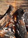 Fire from wooden logs on holidays Royalty Free Stock Photography
