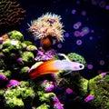 Firefish in marine aquarium Stock Image