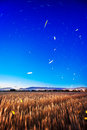 Fireflies dancing strartrails orbit with Stock Photos