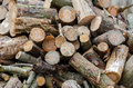 Firewood big pile of conifers Stock Photography
