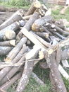 Firewood chopped are used especially in the remoteness areas Stock Photo