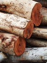 Firewood group of abandoned log many size altered weathered leaving outdoor Stock Photo