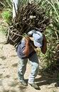 With firewood hauling Guatemalan Indian man Royalty Free Stock Photo