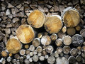 Firewood heap of and tree trunks Stock Photo