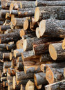 Firewood logs pile of for Stock Photos