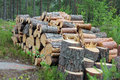 Firewood Logs in Summer Forest Royalty Free Stock Photo