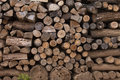 Firewood a pile of in the yard Royalty Free Stock Photography