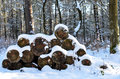 Firewood with snow Stock Images
