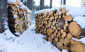 Firewood store in forest Stock Photography