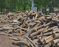 Firewood wood at the depot cut the log and ready for sale Royalty Free Stock Images