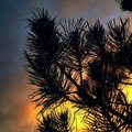 Firey sunset tree branch with glowing Stock Photo