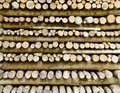 Firs logs piled up to a wood stack Stock Photos