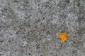 First autumn leaf on a concrete Stock Images