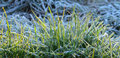 First november frost on  a plant Royalty Free Stock Photo
