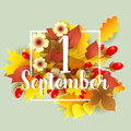 First september autumn background bright birch oak maple chestnut leaves and berry with flowers light square frame Royalty Free Stock Image