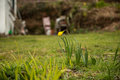 First Signs of Spring Royalty Free Stock Photo