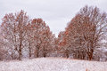 First snow in the autumn park. Fall colors on the trees. Autumn Royalty Free Stock Photo