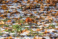 The first snow fallen down leaves and Stock Images