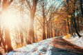 First snow in the forest. Beauty world. Road