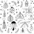 First spring flowers background. Floral elements, insects drawings. Hand drawn botanical illustrations. Garden and