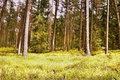 First spring sunshine in the woods in Macha's land in czech nature Royalty Free Stock Photo