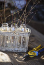 First spring twigs in bottles in basket with garden pruner Royalty Free Stock Photo
