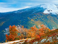 First winter snow and autumn colourful foliage on mountain Royalty Free Stock Photo