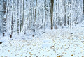 First winter snow and last autumn leafs in forest Royalty Free Stock Photo