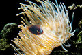 Fish and anemone Stock Photos