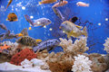 Fish in aquarium with and blue water Royalty Free Stock Photography