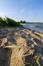 Fish bones on sand beach Royalty Free Stock Photo